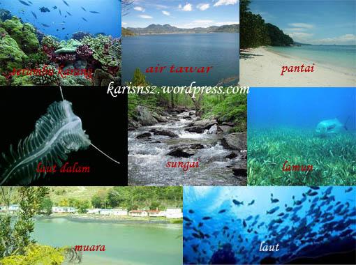 Jenis-Jenis Ekosistem Perairan